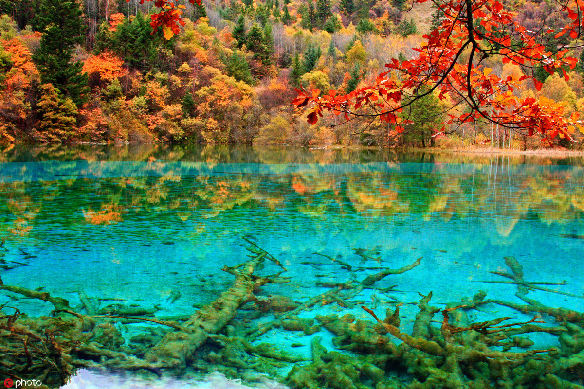 muTu Note Maple leaves paint fall in beauty around world 2