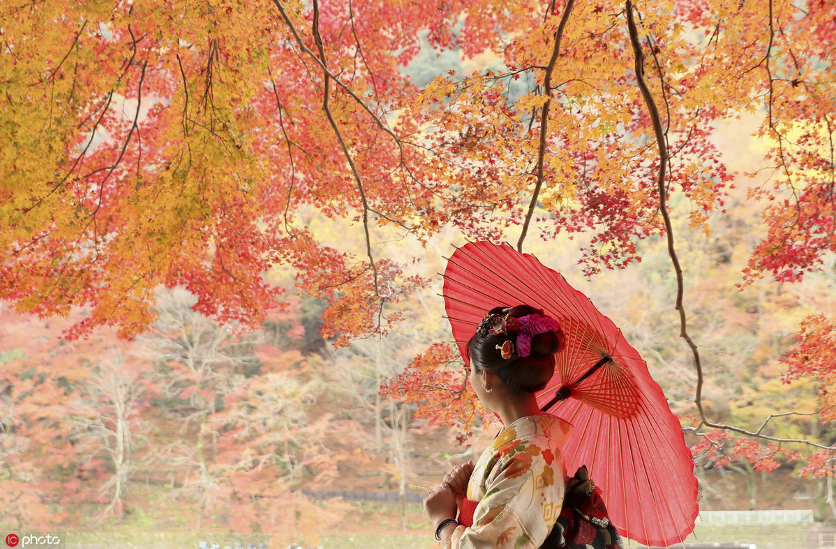 muTu Note Maple leaves paint fall in beauty around world 3
