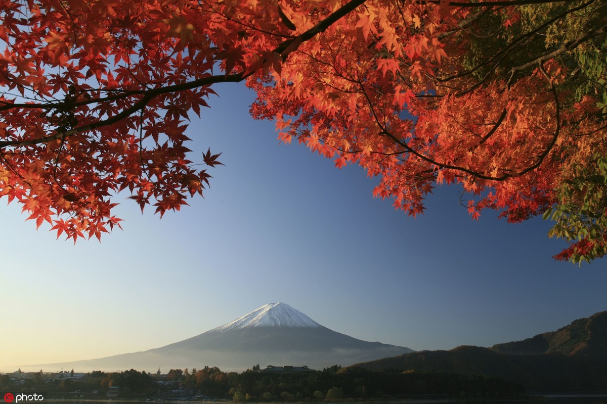 muTu Note Maple leaves paint fall in beauty around world 4