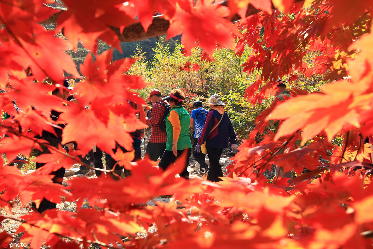 muTu Note Maple leaves paint fall in beauty around world 6