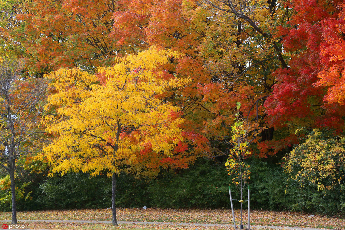 muTu Note Maple leaves paint fall in beauty around world 7