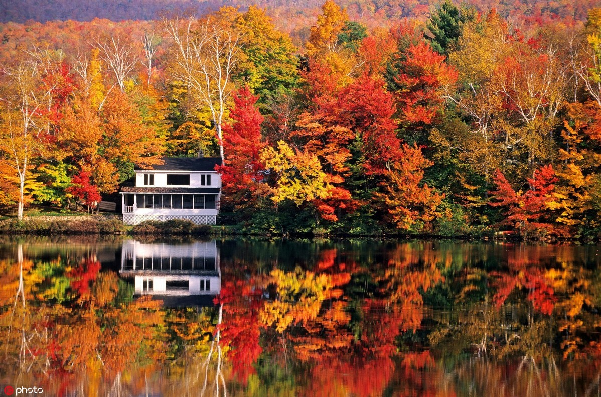 muTu Note Maple leaves paint fall in beauty around world 8